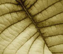 Natur, Farben, Blätter, Sephia