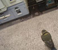 Unten, Vogelperspektive, Fenster, Straße