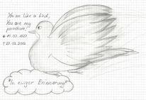 Vogel, Taube, Zeichnung, Malerei