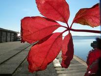 See, Steg, Blätter, Stimmung