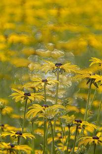 Farben, Blumen, Gelb, Feld