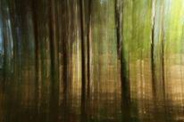 Farben, Wald, Baum, Licht