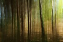 Herbst, Farben, Wald, Baum