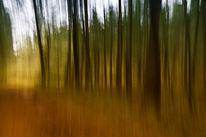 Baum, Wald, Weg, Herbst
