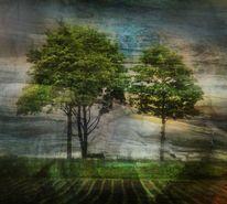 Baum, Licht, Natur, Feld