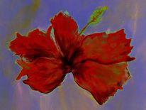 Blüte, Hibiskus, Malerei, Rot