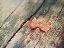 Bank, Blätter, Braun, Herbst