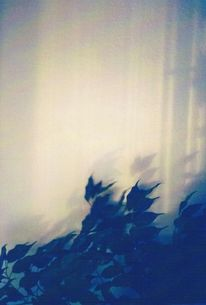 Pflanzen, Schatten, Blätter, Sonne
