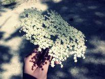 Blumen, Hand, Fotografie, Pflanzen