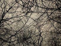 Baum, Äste, Fotografie, Pflanzen