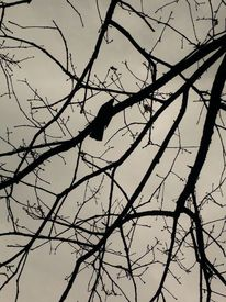 Baum, Äste, Himmel, Vogel