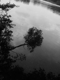 Baum, Fotografie, Pflanzen