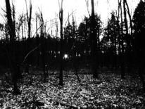 Schwarzweiß, Sonne, Fotografie,