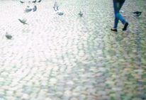 Taube, Freiheit, Bein, Vogel