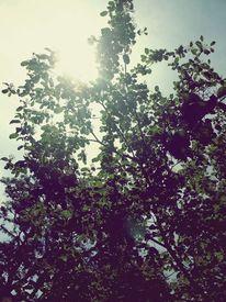 Blätter, Leuchten, Sommer, Baum