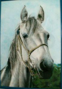 Pferde, Portrait, Ölmalerei, Tiere