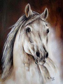 Pferdeportrait, Pferde, Pferdemalerei, Araber