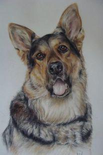 Hundezeichnug, Hundeportrait, Schäferhund, Malerei