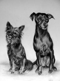 Hundeportrait, Hundezeichnung, Zeichnungen