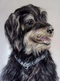 Jagdterrier, Hundeportrait, Hundezeichnung, Malerei