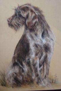 Hundezeichnung, Hundeportrait, Hund, Zeichnungen