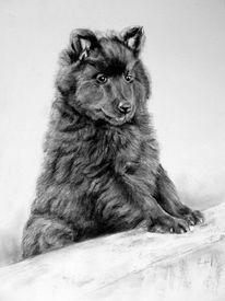 Welpe, Hundeportrait, Bleistiftzeichnung, Zeichnungen