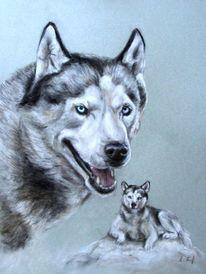 Hundeportrait, Husky, Zeichnungen