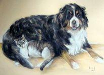 Katzenportrait, Hund, Katze, Hundeportrait