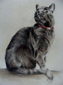 Katze, Katzenportrait, Malerei, Tiere