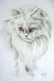 Katzenportrait, Perserkatze, Bleistiftzeichnung, Tierportrait
