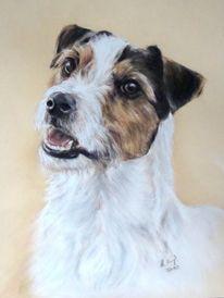 Parson russel terrier, Hundeportrait, Jack russel, Tiermalerei