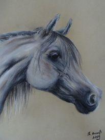 Pferdeportrait, Araber, Pferdezeichnung, Pferdemalerei