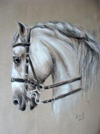 Pferdeportrait, Malen, Lipizzaner, Zeichnung
