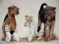 Hundeportrait, Hundeportraits, Airedale terrier, Foxterrier