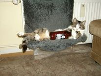 Herrentag, Katze, Bier, Männertag