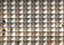 Katze, Felidae, Fotografie, Tiere