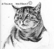 Tiere, Tierheim, Atelier, Katze