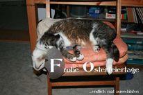 Schlaf, Müde, Katze, Fotografie