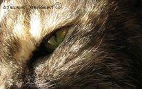 Katze, Chat, Augen, Haustier