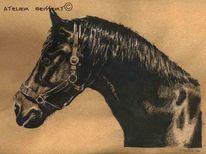 Tiere, Rappe, Pferde, Kavallerie