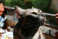 Schildpatt, Tiere, Katze, Lustig