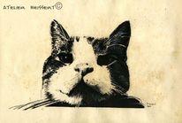 Tiere, Haustier, Katze, Felidae