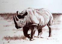 Nashorn, Leipzig, Afrika, Dickhäuter