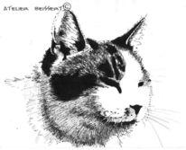 Tiere, Katze, Felidae, Fell