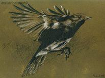 Rotkelchen, Kohlezeichnung, Singvogel, Vogel