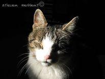 Katze, Frühling, Sonne, Felidae