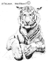 Katze, Leipzig, Großkatze, Leipziger zoo