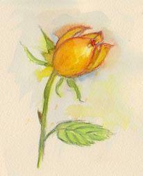 Rose, Aquarellmalerei, Blumen, Aquarell