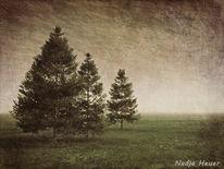 Friedlich, Landschaft, Baum, Idylle