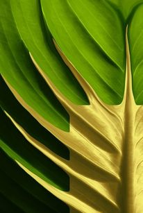 Design, Blätter, Grün, Makro